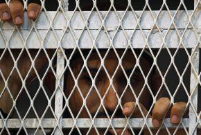 Emiratos Árabes Unidos opera prisiones secretas de tortura en Yemen con ayuda de EEUU